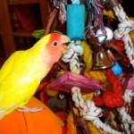 parrot with toys