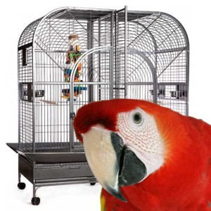 Large Parrot Cages