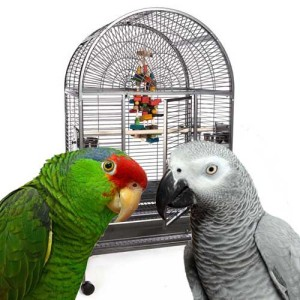 Medium Parrot Cages