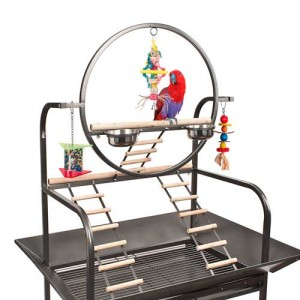 Parrot Stands