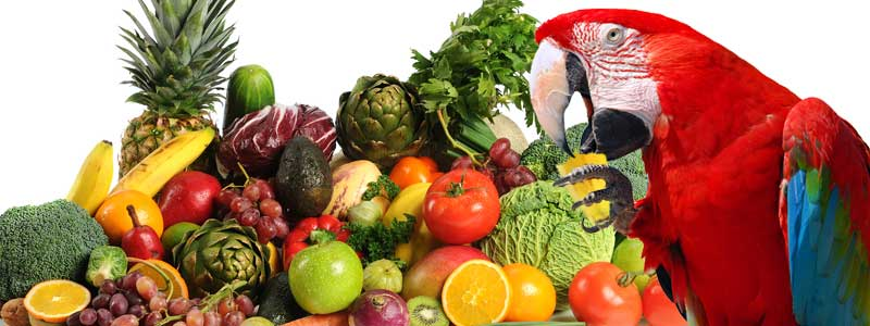 Parrot eating fresh fruits and vegetables